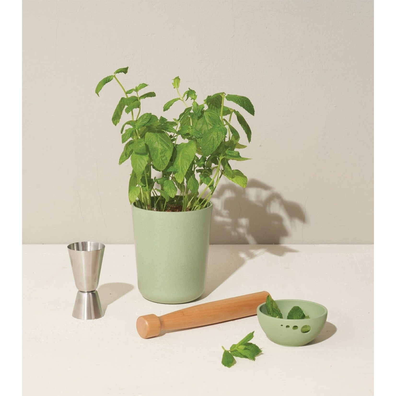 Modern Sprout Ensemble cadeau CELEBRATE / menthe bio