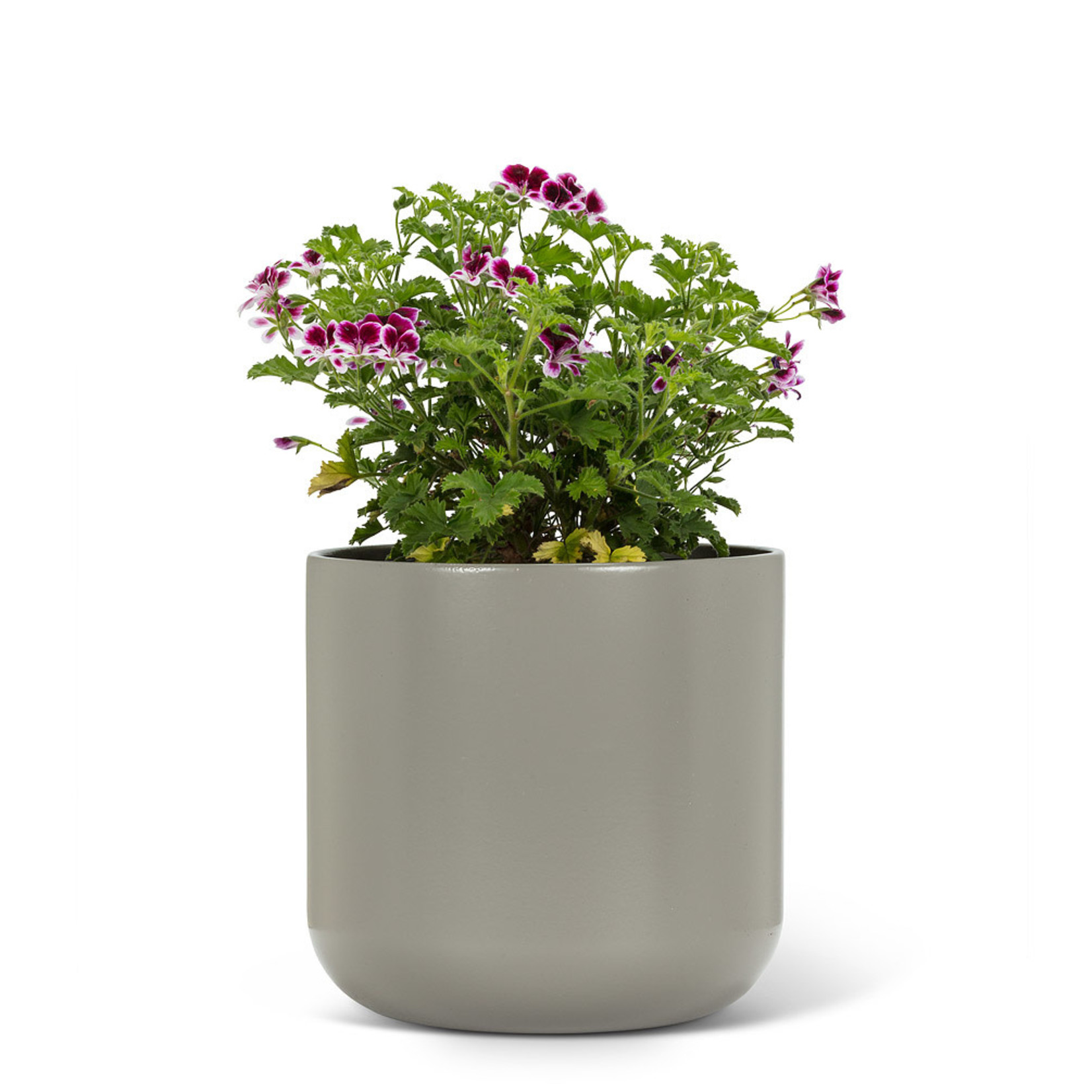 Abbott Cache-Pot GRAYDON - Large