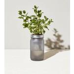 Modern Sprout Bocal de jardin - Menthe