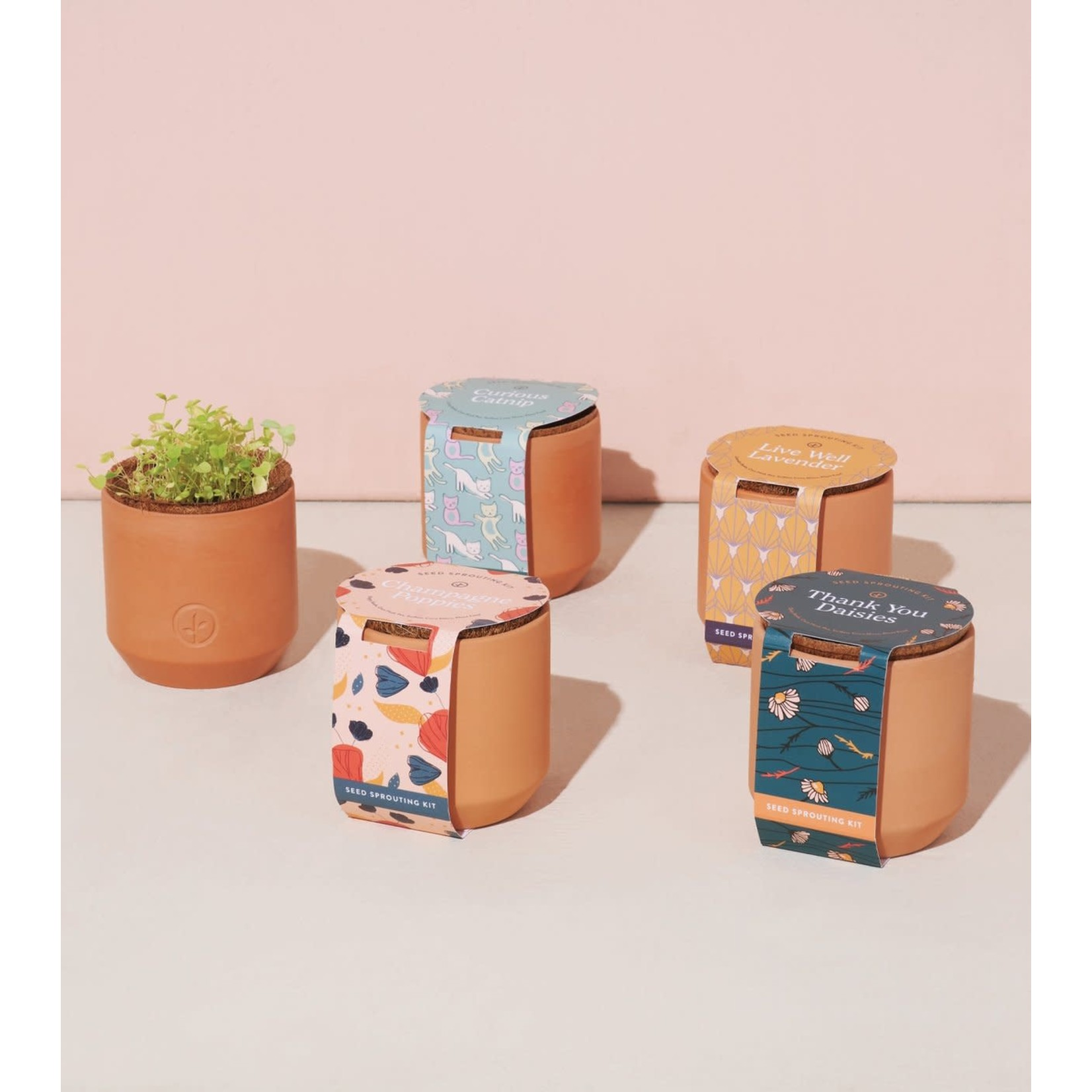 Modern Sprout Ensemble de jardin - Herbes à chat