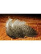 Hareline Dubbin Gadwall Feathers