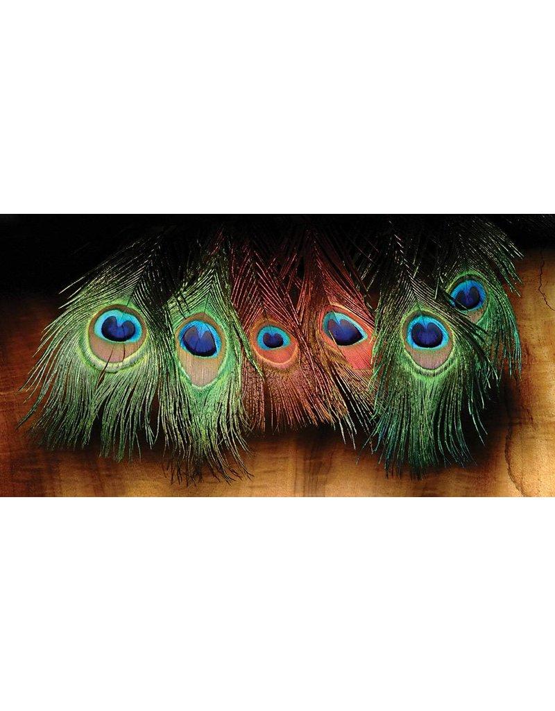 Hareline Dubbin Peacock Eyed Sticks