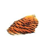 Hareline Dubbin Golden Pheasant Complete Natural Tippet