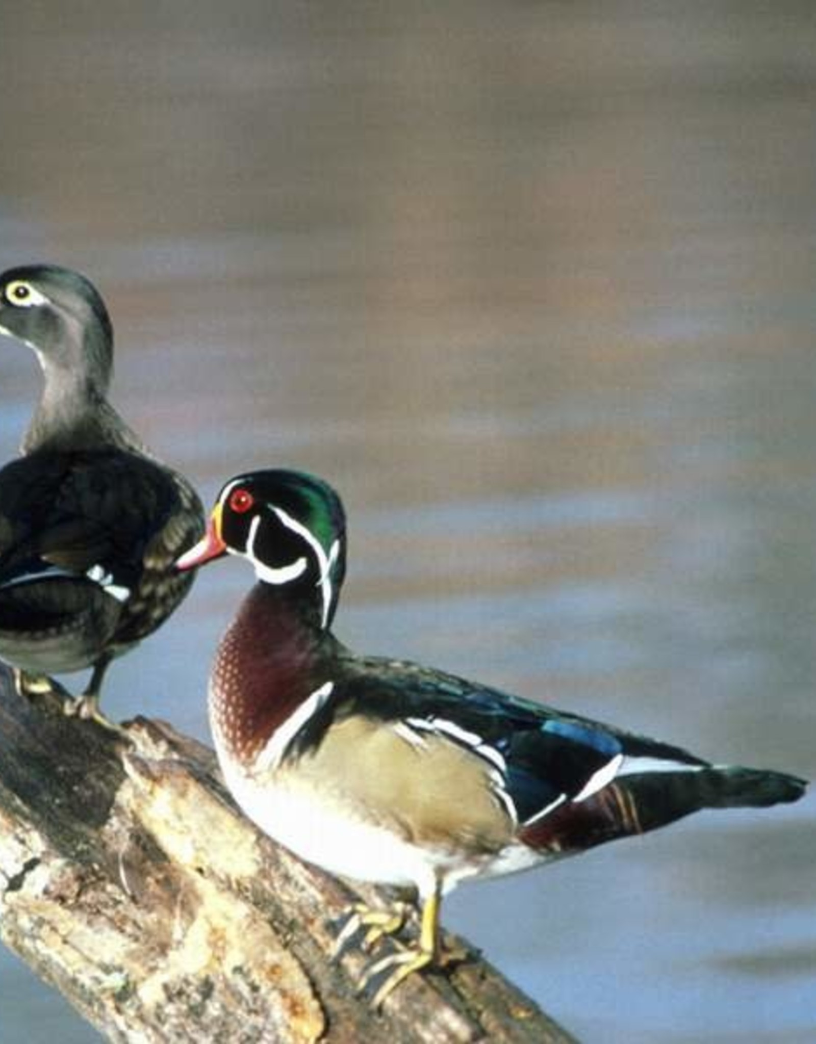 John James Audubon Center Annual Pass - Friend Level