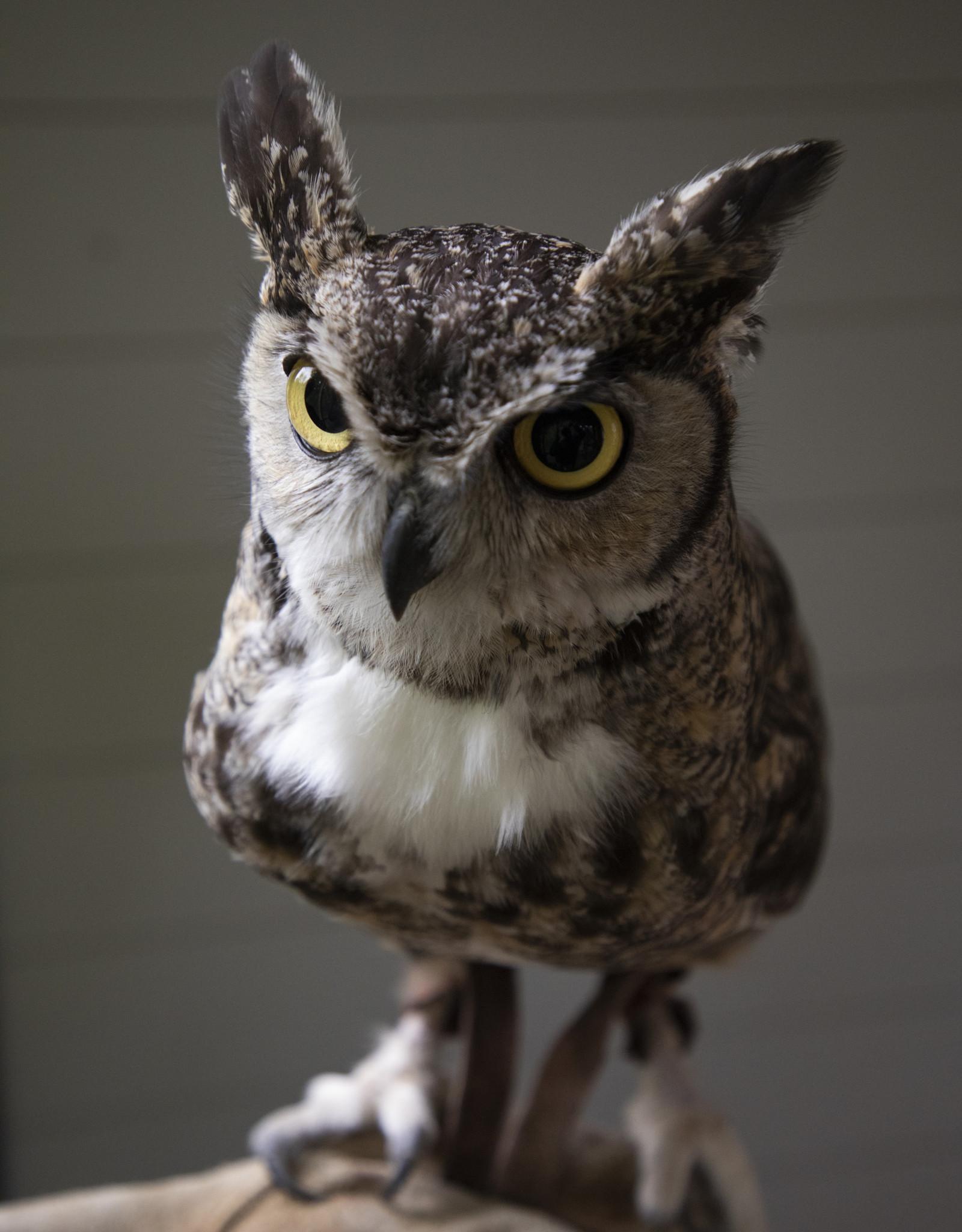 John James Audubon Center Annual Pass - Supporter Level