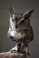 John James Audubon Center Annual Pass - Individual Level