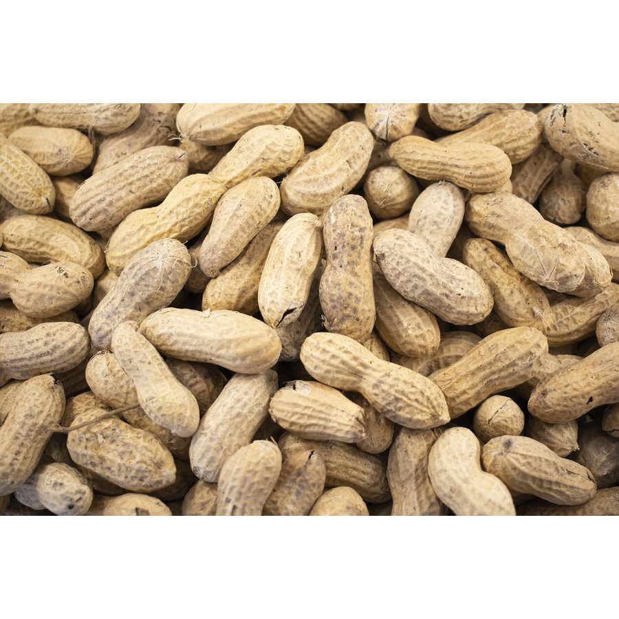 Shelled Peanuts