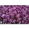 Albanese Ourson raisin