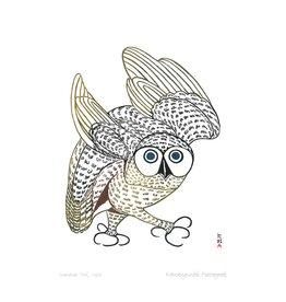 Summer Owl 1972 par Kananginak Pootoogook Encadrée