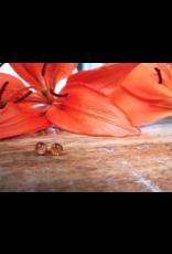 Boucles d'Oreilles Argent Lis Tigrés de Saskatchewan 5mm - SK0505S