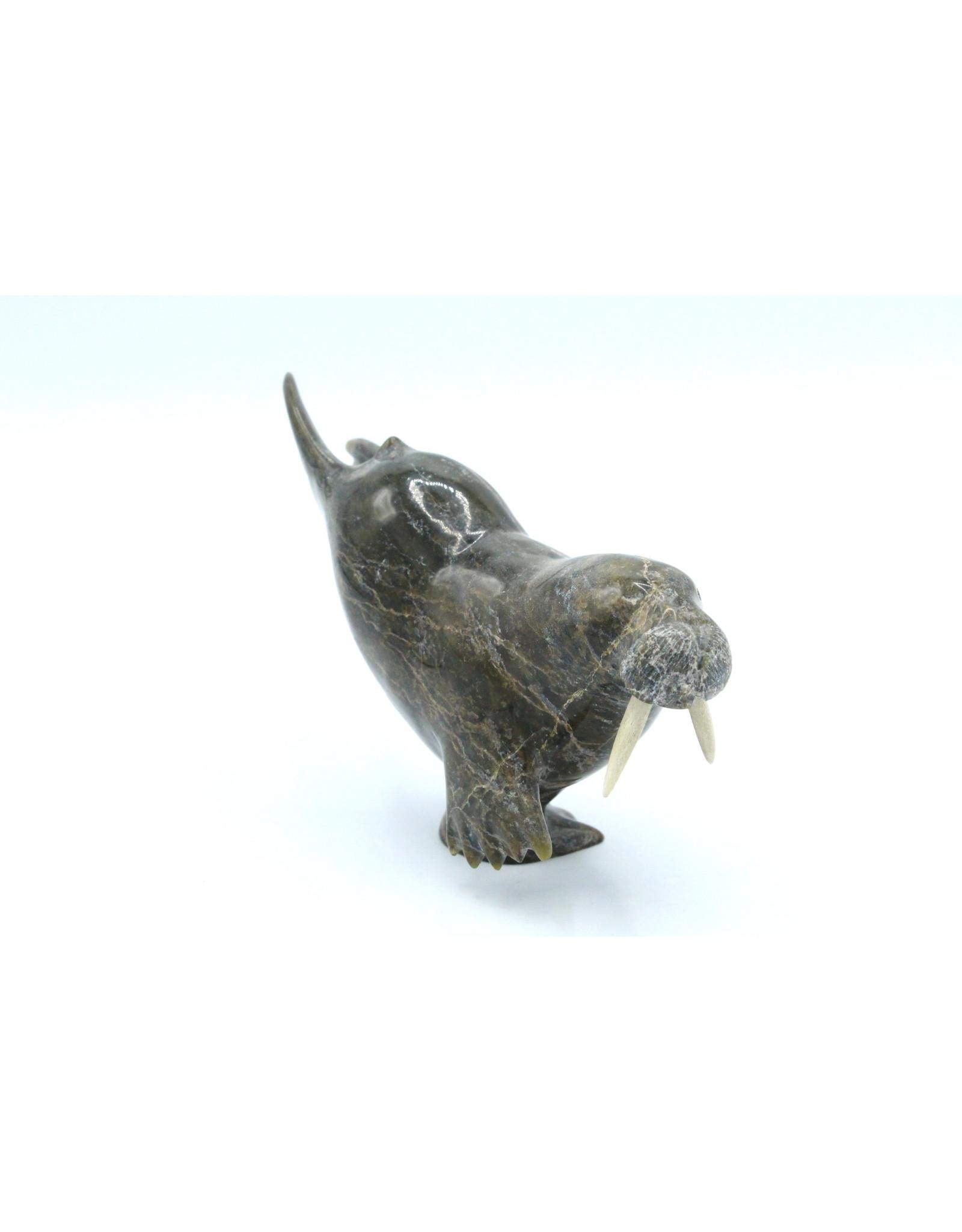 60209 Walrus by Pudlik Shaa