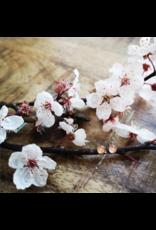 Boucles d'Oreilles Plaqué Or 4mm Fleur de Cerisier de B.C - VCB0504G