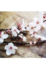 B.C Cherry Blossom 5mm Gold Earrings - VCB0505G