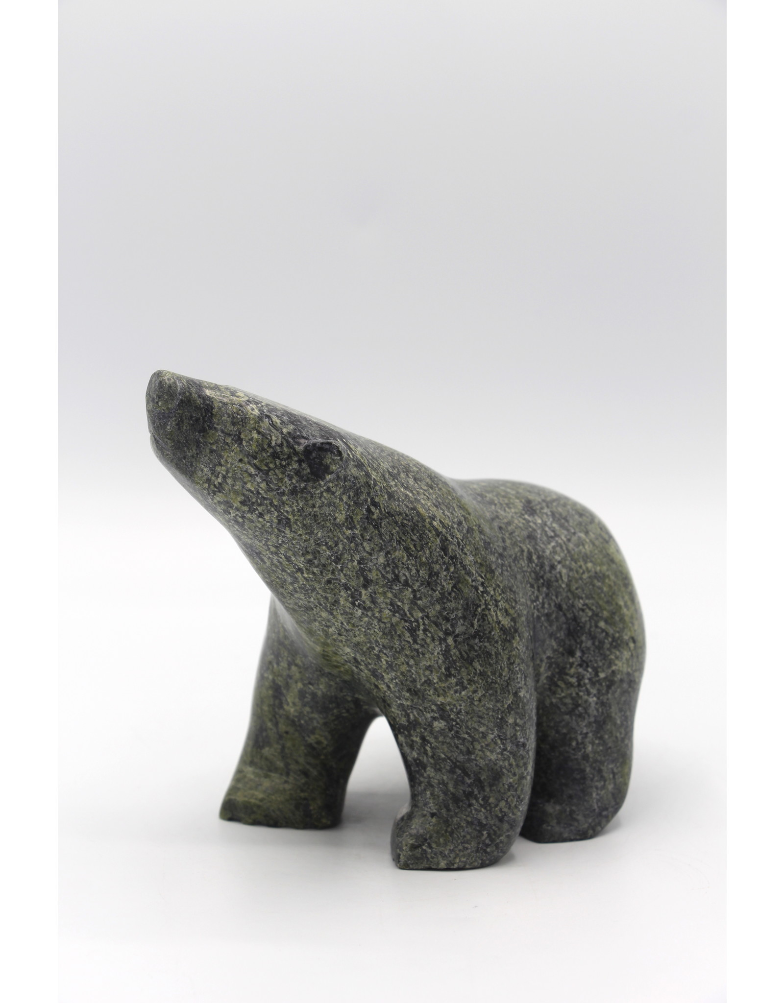 56077 Bear by Tony Oquitaq