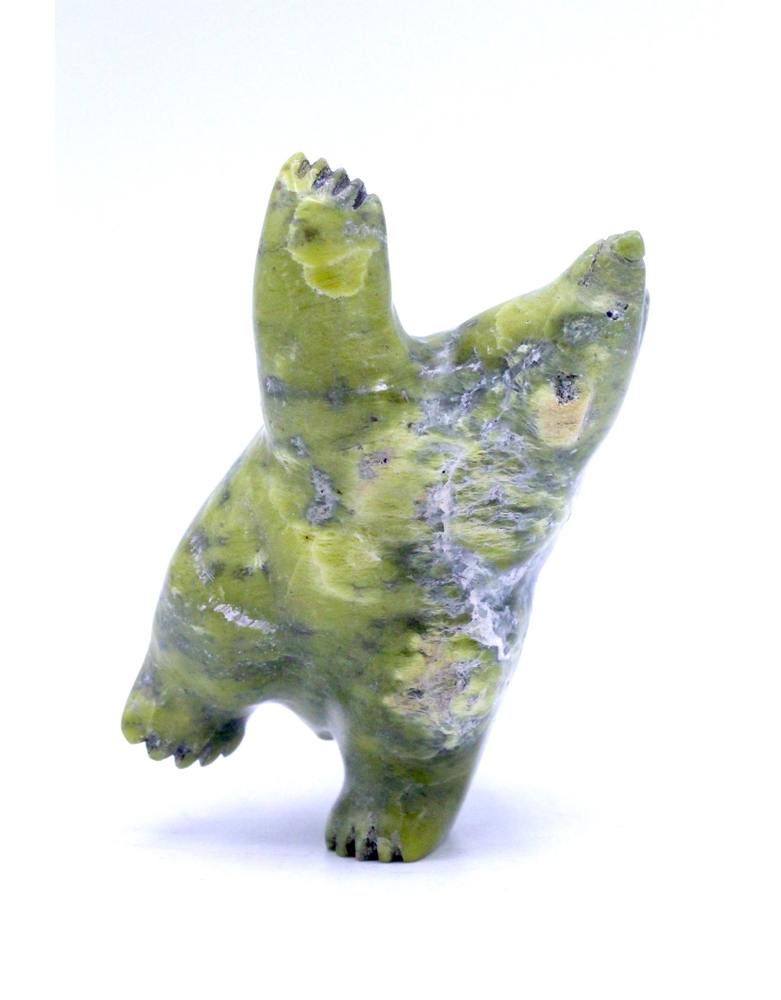 Bear 66459 by Samonie Shaa