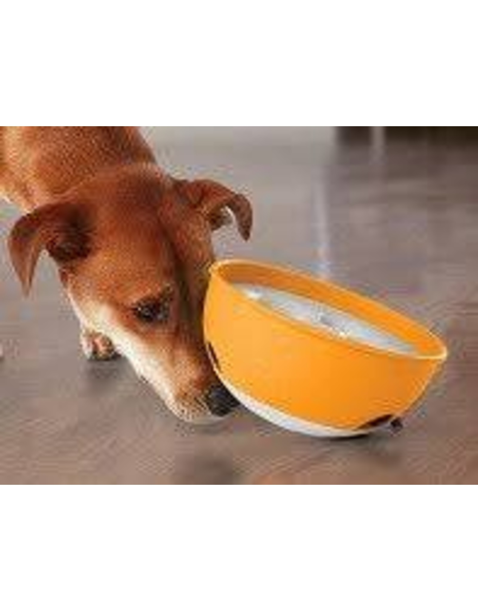 PAW5 PAW5 ROCK N ROLL BOWL ORANGE