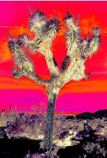 Joshua Tree Red Sky Matted- S