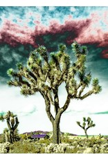 Joshua Tree Storm Clouds Matted- S