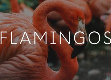 Flamingos - Unicorns - Rainbows