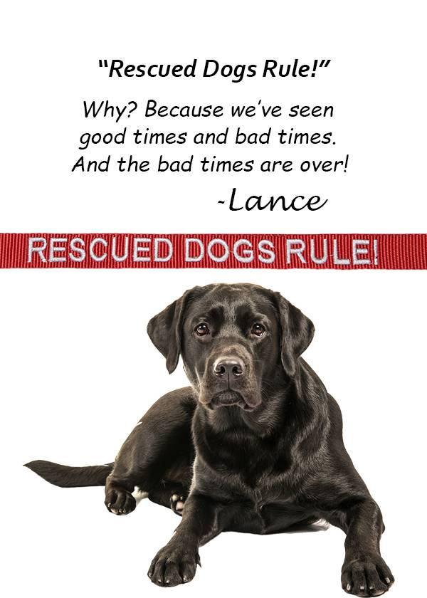 """Rescued Dogs Rule"" Leash"