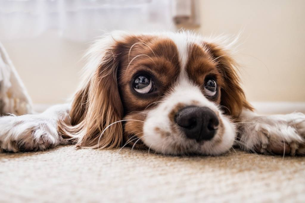 Pet Care: Grooming Your Dog