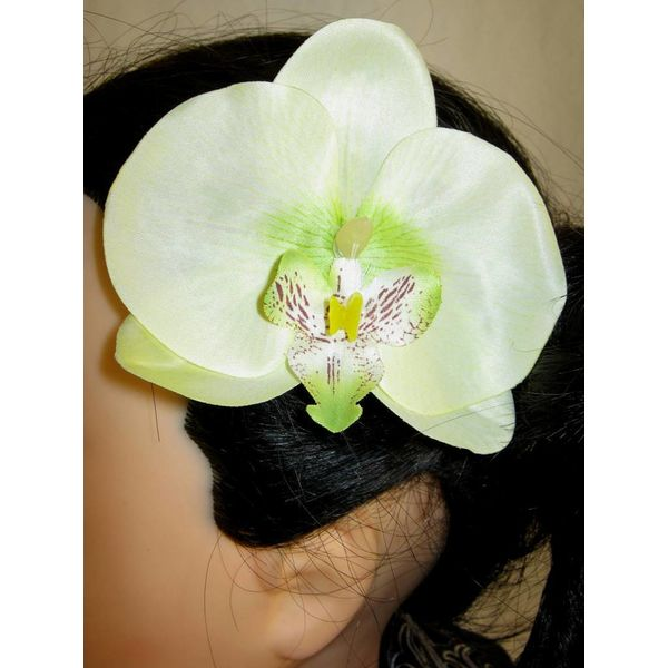 Green Fairy Orchids 2 x