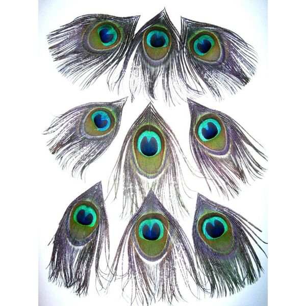 Peacock Upgrade for Dreads