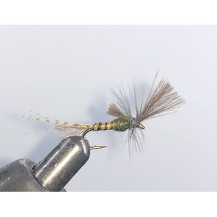 CDC Quigley BWO