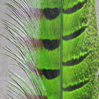 Hareline Dubbin Ringneck Pheasant Tail Feather