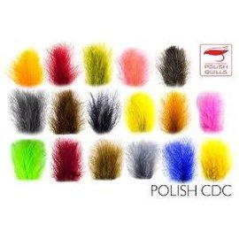 Polish Quills Polish CDC