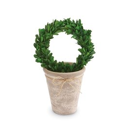 MudPie Med Preserved Boxwood Topiary