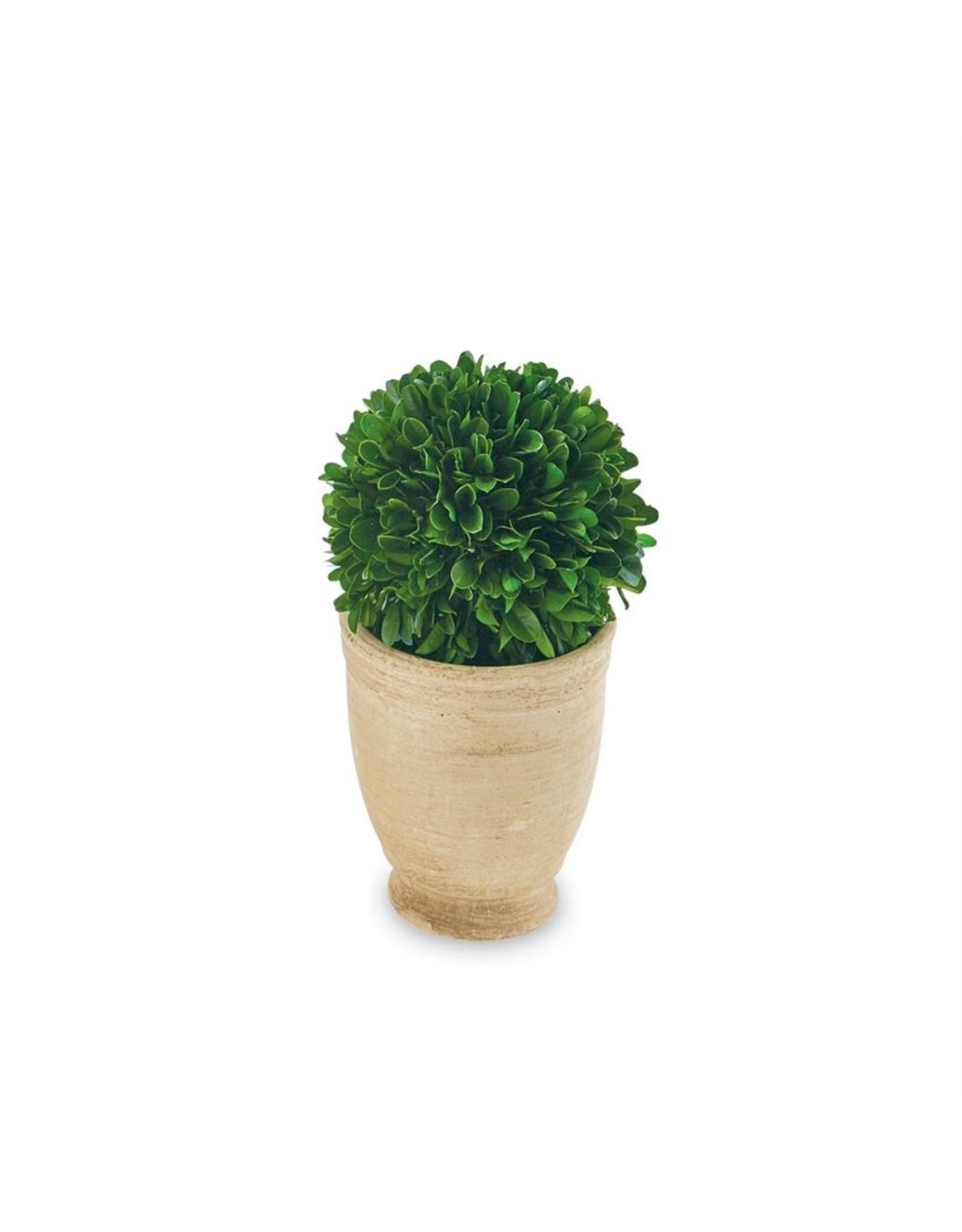 MudPie Round Large Boxwood Topiary