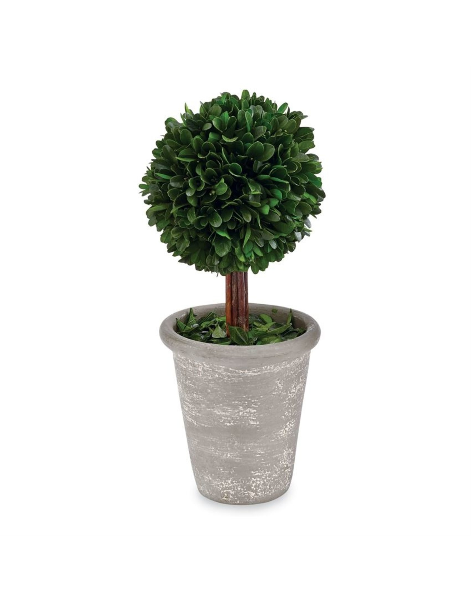 MudPie Stem Large Boxwood Topiary