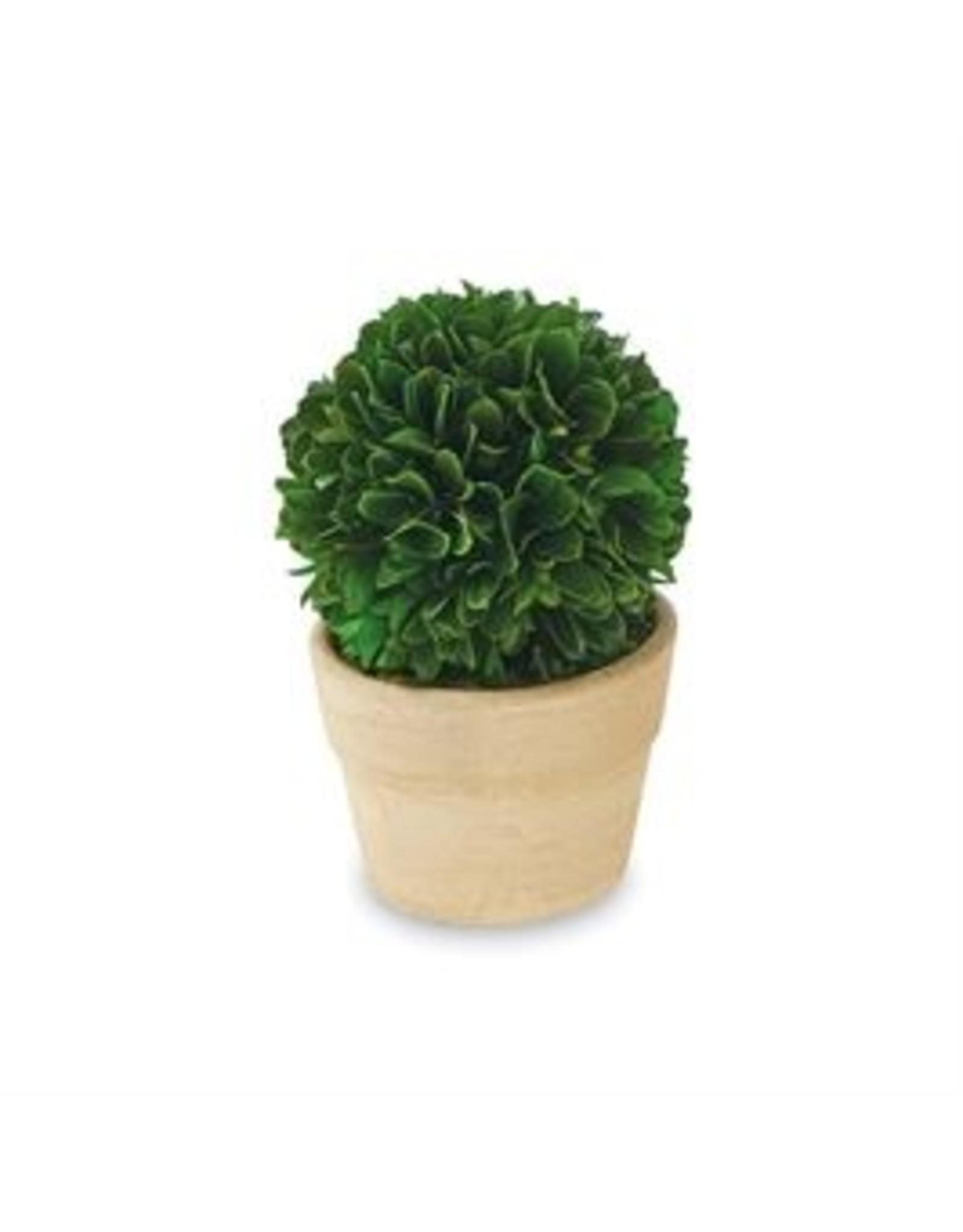 MudPie Round Small Boxwood Topiary