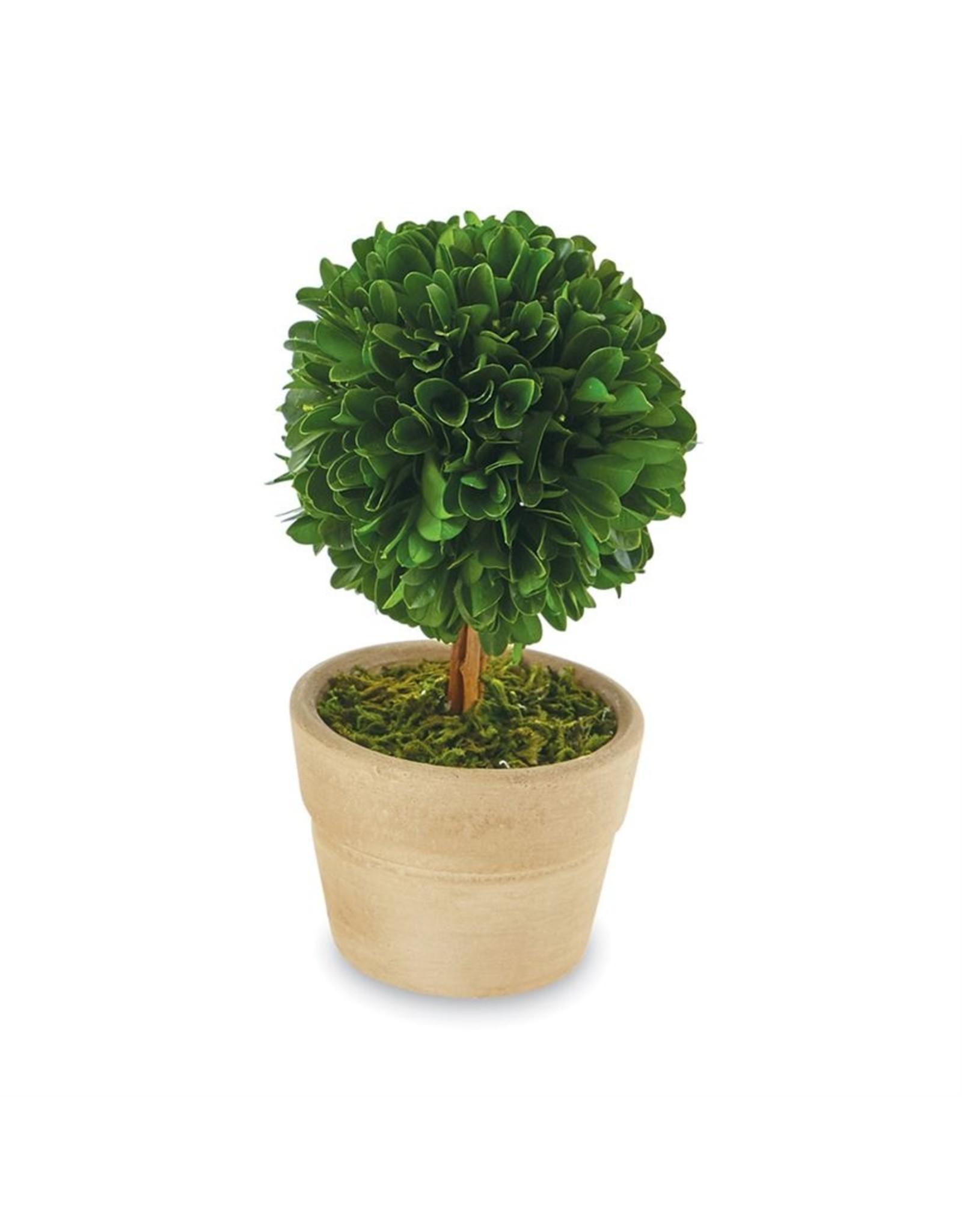 MudPie Stem Small Boxwood Topiary