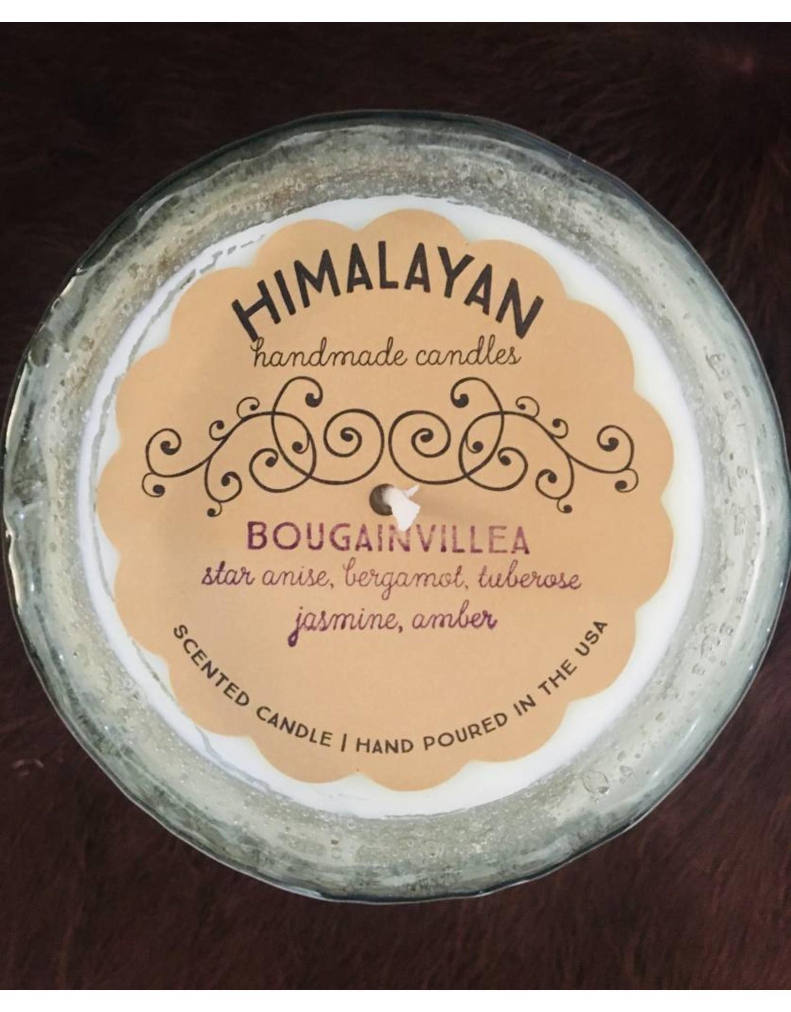 Himalayan Clear-Bougainvillea