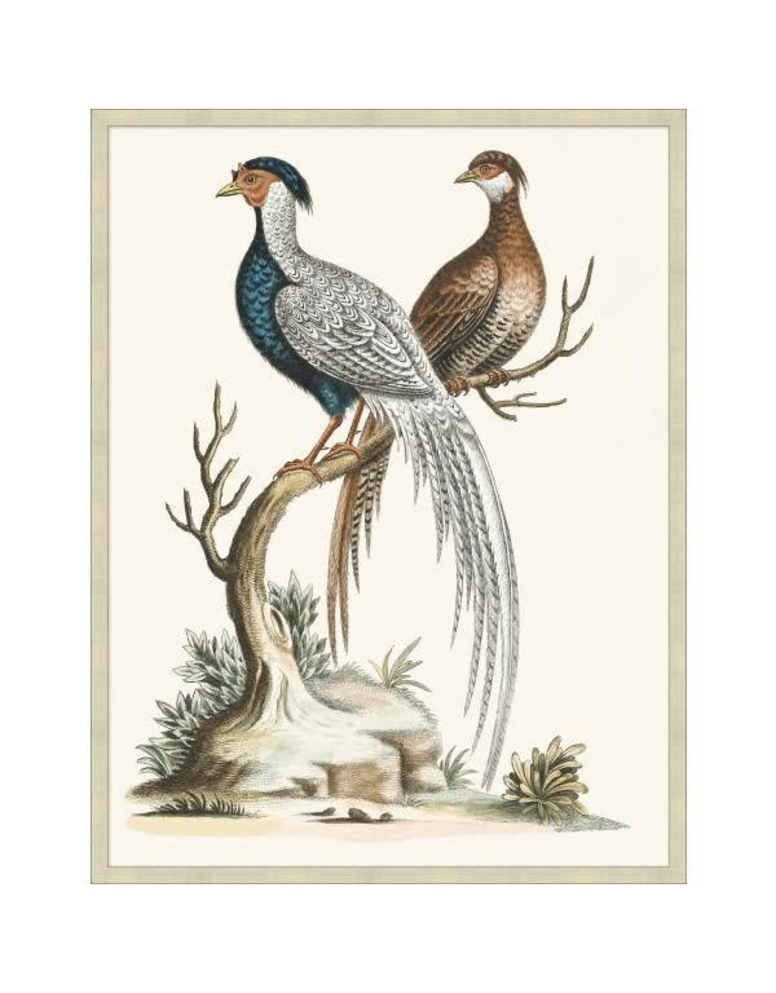 Wendover Art Wendover art grand pheasant 2