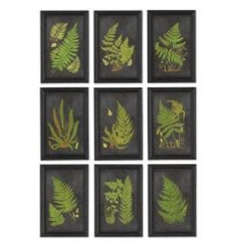 Napa Home and Garden Framed Fern Botanical Prints set of (4)