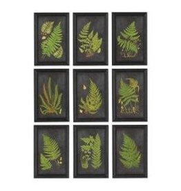 Napa Home and Garden Framed Fern Botanical Prints set of (4)