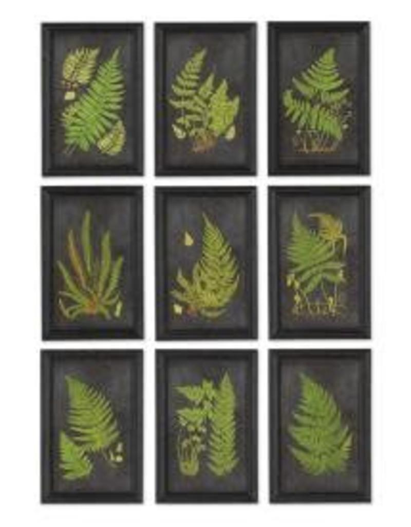 Napa Home and Garden Napa Framed Fern Botanical Prints 6 art decor