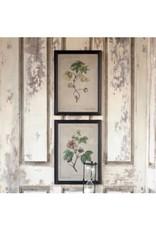 ParkHill Cotton Plant Botanical Print