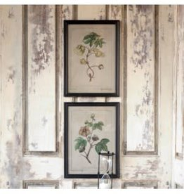 ParkHill Cotton Plant Botanical Print