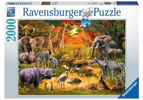 Ravensburger Réunion au plan d'eau