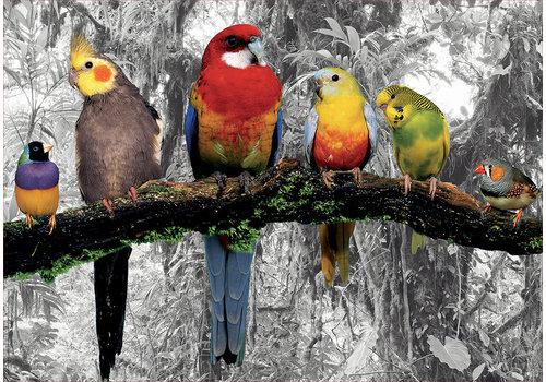 Educa Casse-tête 500 pièces - Oiseaux dans la jungle
