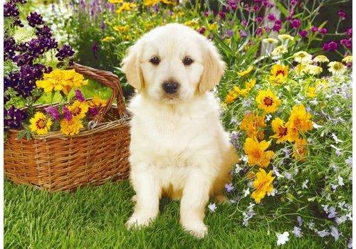 trefl Labrador dans le jardin