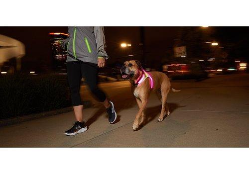 NOXGear, LLC NOXGEAR LightHound Lighted Dog Vest - Small