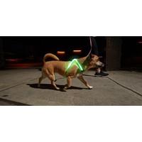 NOXGEAR LightHound Lighted Dog Vest - Small