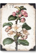 Sid Dickens T-462 Apple Blossom Memory Block