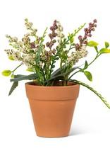 "Lavender Plant Pink 6"""