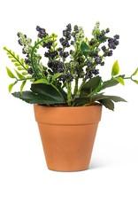 """Lavender Plant Purple 6"""""""